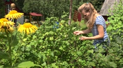 Peasant woman picking fresh organic black currant from bush in garden. 4K Stock Footage