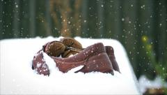 Moccasins in snow. Winter came in one night - stock footage