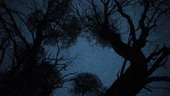 Spooky Tree, Spooky Timelapse Stock Footage
