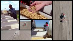 Split screen of soybean sowing in the spring. Stock Footage