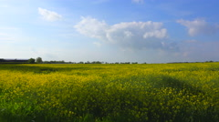 Pan across beautiful fields of flowers in the rural countryside of England. - stock footage