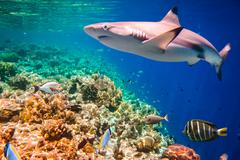 Tropical Coral Reef. Stock Photos