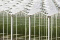 A large greenhouse seen from outside with endless roof. - stock photo