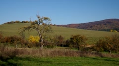Apple tree in autumn in orchad Stock Footage