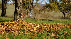 Trees in autumn with fallen leaves Stock Footage
