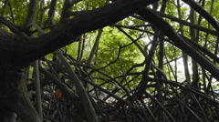 Inside in mangrove forest point of view slider tracking shot Stock Footage