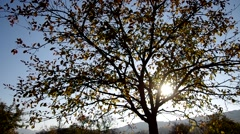 Trees in autumn and blue sky Stock Footage