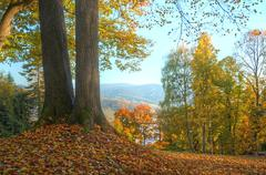 Trees with orange and yellow leaves HDR - stock photo