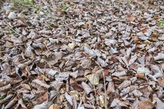 Dry fallen leaves in autumn Stock Photos