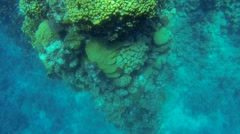 Beautiful coral in the Red Sea Stock Footage