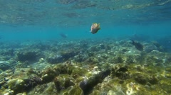 Red Sea junker close Stock Footage