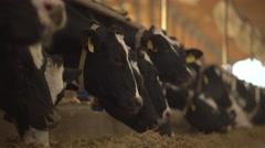 Cows linin up at the feeder 4K Stock Footage