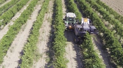 Harvesting grapes with harvester agricultural machine aerial view Stock Footage