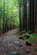 Footpath in Mountan Forest Stock Photos