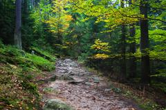 Trail in Autumn Mountain Forest - stock photo