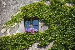 Overgrown wall of residential building facade - stock photo
