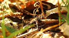 ants brown leaves, sunny weather - stock footage