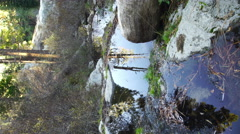 4K Reflections on Creek 07 Vertical Pine Forest Loop Stock Footage