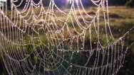 Stock Video Footage of A dew covered spider web