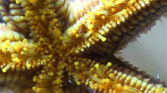 Close up of the underside of a sea star crawling Stock Footage