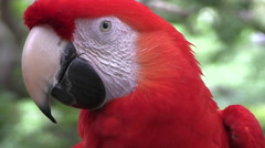A macaw in a rainforest Stock Footage
