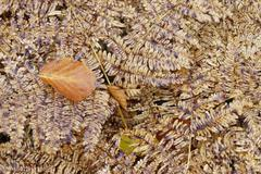 Dried leaf on the fern Stock Photos