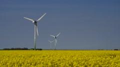 Wind turbines and rape field Stock Footage