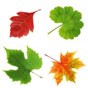 Leaves of a hawthorn, maple, geranium, grapes , isolate. Stock Photos