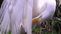 A mother crane stands over her chicks Stock Footage
