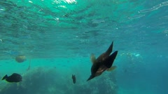 Thousand small fish Stock Footage