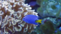 4k tropical exotic colorful fish underwater sun rays ocean coral reef nemona Stock Footage
