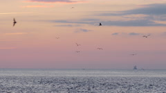 Flock of silhouetted sea birds on vivid summer sunset backdrop Stock Footage