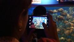 4k tropical exotic fish underwater people taking pictures and video piranhas Stock Footage