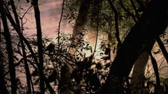 The woods,Have a smoke Stock Footage