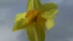 Live Painting. Daffodil, Springtime Scenery Stock Footage