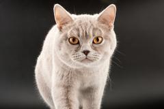 Walking little tabby kitten - stock photo