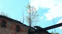 grew a tree on top of a building - stock footage