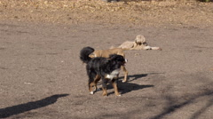 Dogs playing in the park. Filmed in Slow Motion. Stock Footage