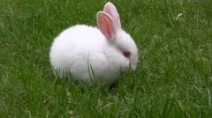 Cute white rabbit playing at the green grass field. Stock Footage