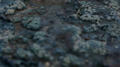 Alien organic matter landscape nodules Stock Footage