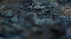 Alien organic matter landscape soft front Stock Footage