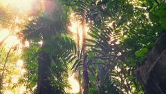 Moving Under Huge Jungle Plants With Sun Flare - stock footage