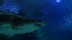4k tropical exotic fish underwater sun rays aquarium clear water shark teeth - stock footage