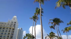 Walking under the palmtrees Stock Footage