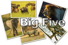 African Big Five Stock Photos