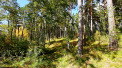Autumn in russian forest Stock Footage