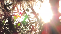 Abstraction a sunlight through tree branches Stock Footage