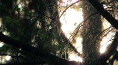 abstraction a sunlight through tree branches - stock footage