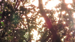 Stock Video Footage of abstraction a sunlight through tree branches