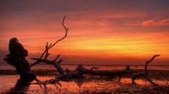 Dead Tree Sunset Stock Footage
